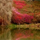 SPRING IS HERE - Magoebaskloof South Africa by Magriet Meintjes