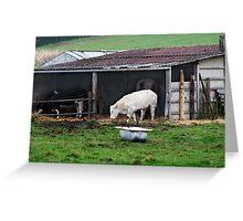 Shed (farm) Greeting Card