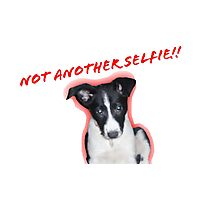 Not Another Selfie - Dog! Photographic Print