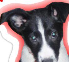 Not Another Selfie - Dog! Sticker