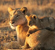 Lioness with cub - Kruger Park  by Neil  Bradfield