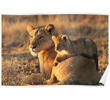 Lioness with cub - Kruger Park  Poster