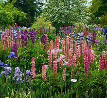 Schreiner's Display Garden 3 by Sharoncr