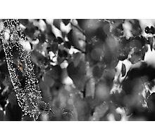 Spider art Photographic Print