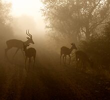 Impala Morning by Neil  Bradfield