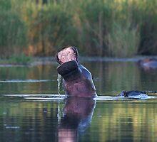 Hippo Mouth by Neil  Bradfield