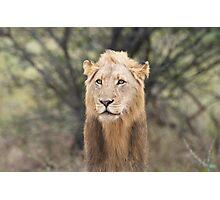 Long Mane Lion Photographic Print