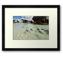 Penguin Swim Framed Print