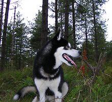 Timberwolf by Graham Povey