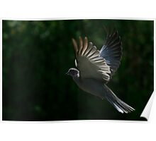 The Wings Of A Dove Poster