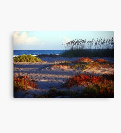 Sand Dunes at Cocoa Beach, FL  Canvas Print