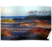 Sand Dunes at Cocoa Beach, FL  Poster