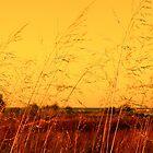 Autumn by Milena Ilieva