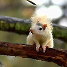 White Squirrel Vogue by Karen Peron