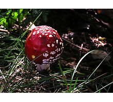Fly Agaric Photographic Print