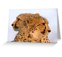 Two Headed Cheetah? Greeting Card