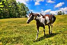 Appaloosa Dream by Karen Peron