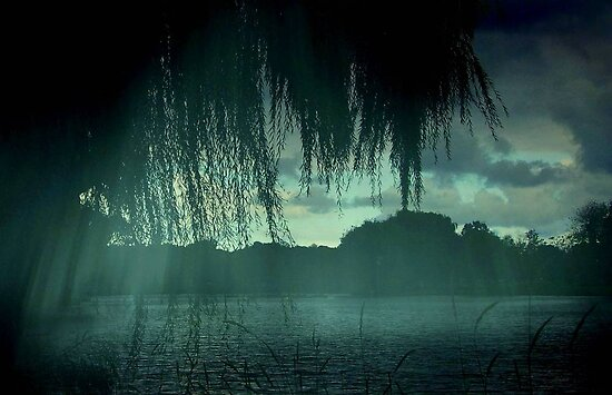Misty Rain ©  by Dawn M. Becker