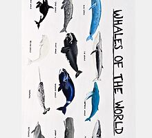 Whales Of The World Chart by aubreysmile