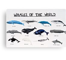 Whales Of The World Chart Canvas Print