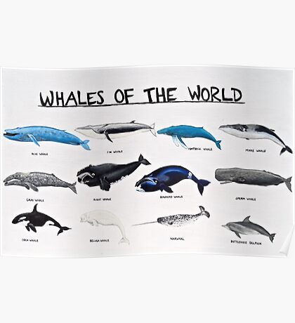 Whales Of The World Chart Poster