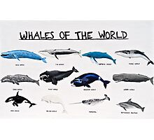 Whales Of The World Chart Photographic Print