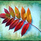 Color of the Sumac by Marija