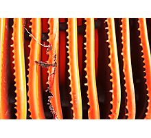 Cones Photographic Print