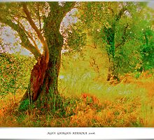 Agios Giorgios . Kerkira . Greece . 2006. by Brown Sugar . Favorites: 5 Views: 532 . THANKS WITH WAAAAWS !!!!! by © Andrzej Goszcz,M.D. Ph.D