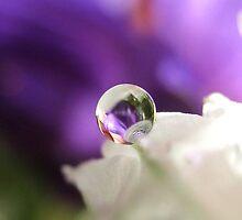 My Last Marble by Tara Lemana