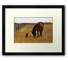 Gypsy and Foal Framed Print