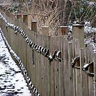 The Roped Fenceline by Brian Gaynor