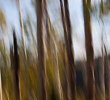Fall Tree Motion Study by rjcolby