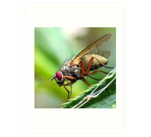 Macro Fly Art Print