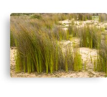 Dune Grass 3 Canvas Print
