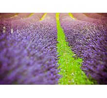 Summer lavender field Photographic Print