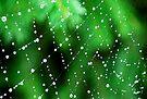 Jade by Tori Snow