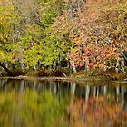 Fall At Eels Creek - 2010 by Tracy Faught
