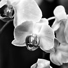 An Orchid For Nevada by Gretchen Dunham
