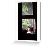 Trixie Kitty in the Window Sill Greeting Card