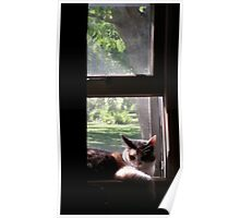 Trixie Kitty in the Window Sill Poster