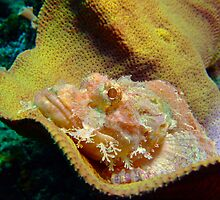 Scorpion fish playing you cant see me by Sean Elliott