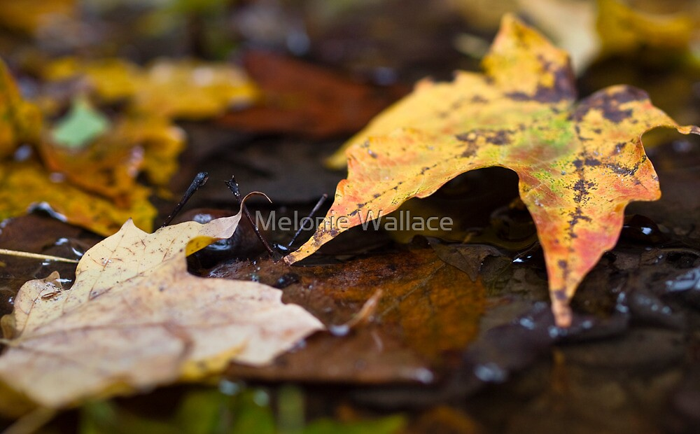 Fall by Melonie Wallace