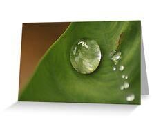 morning dew on leaf Greeting Card