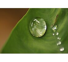 morning dew on leaf Photographic Print