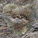 I Heart Lichen by ToddDuvall