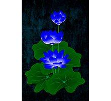 Blue Lotus Photographic Print
