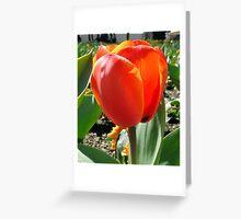 Floriade 2010 - 122 Greeting Card