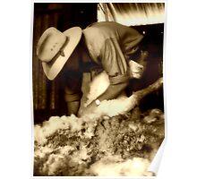 shearing in spring Poster