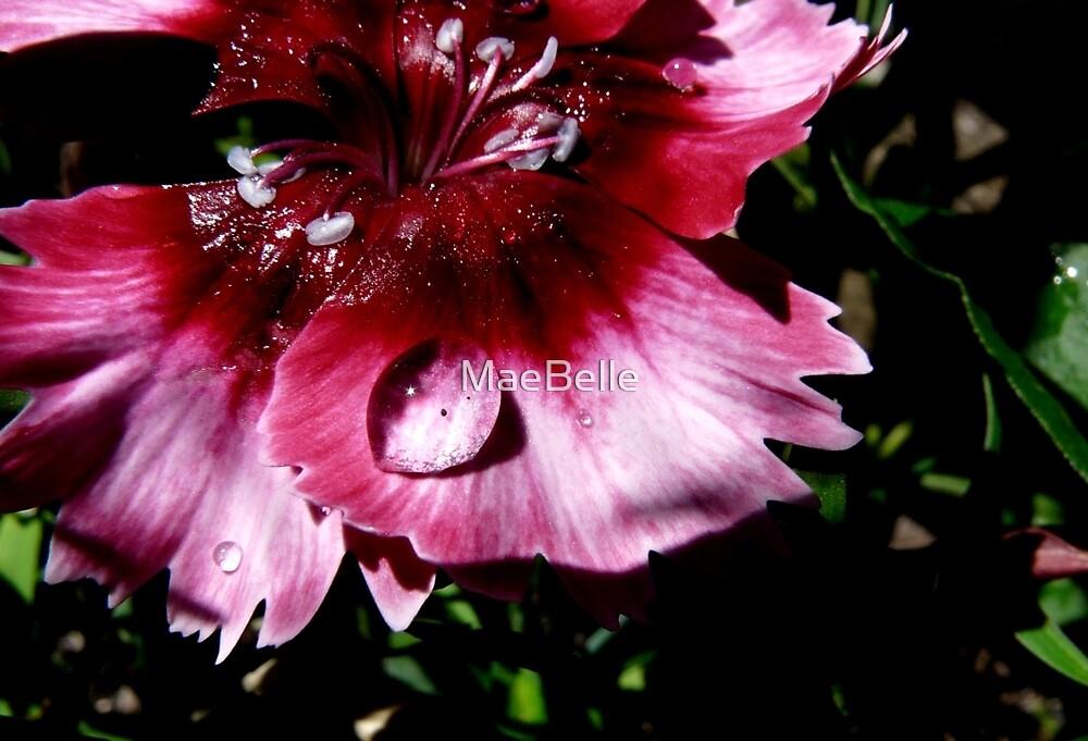 Rain Drops And Petals by MaeBelle
